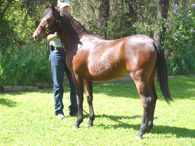 Yearling photo