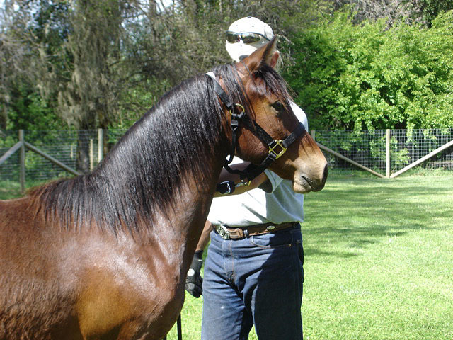 Mystic as a yearling