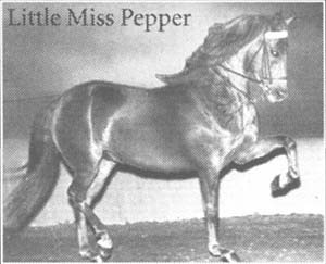 Little Miss Pepper